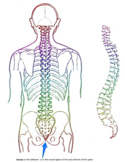 spine2b.jpg